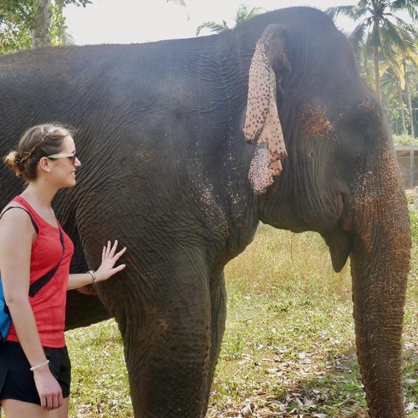 Elefanten streicheln | alltours Reiseblog