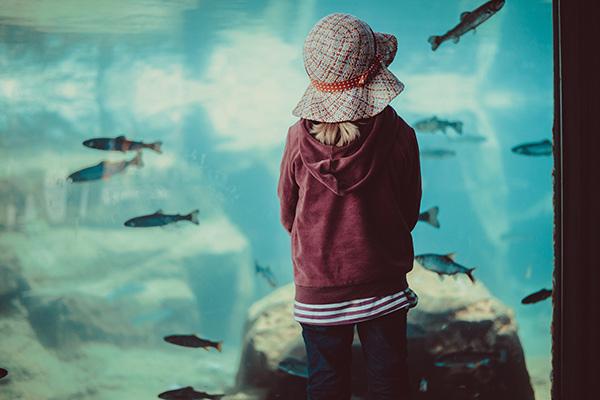 Wien Kind vor dem Aquarium | alltours Reiseblog