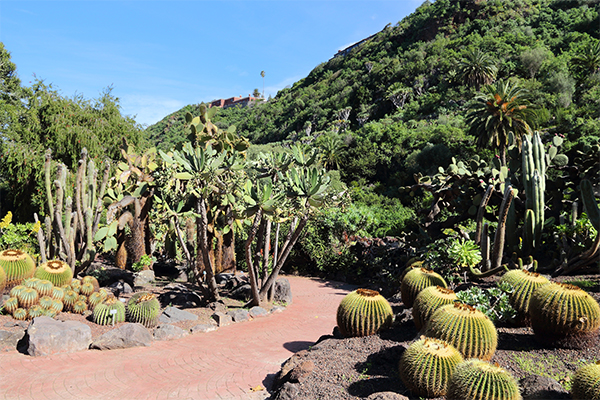 Kakteenlandschaft auf Gran Canaria | alltours Reiseblog
